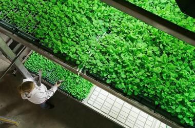 Dall'Olanda arriva la bio-innovazione made in Sicily