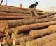 Stop a import legno illegale, Cdm approva decreto
