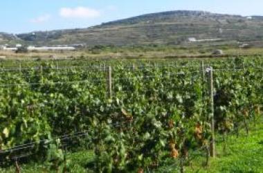 Refrigerare le cantine a costo zero e alimentare i bus.Al via progetto ViEnergy nell'ambito della cooperazione Italia-Malta