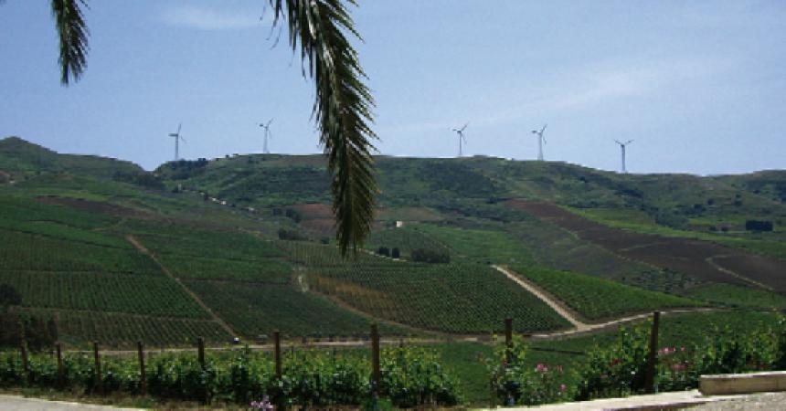 Progetto Divin con esperti tunisini e siciliani ad Alcamo per parlare di vitigni autoctoni e biodiversità
