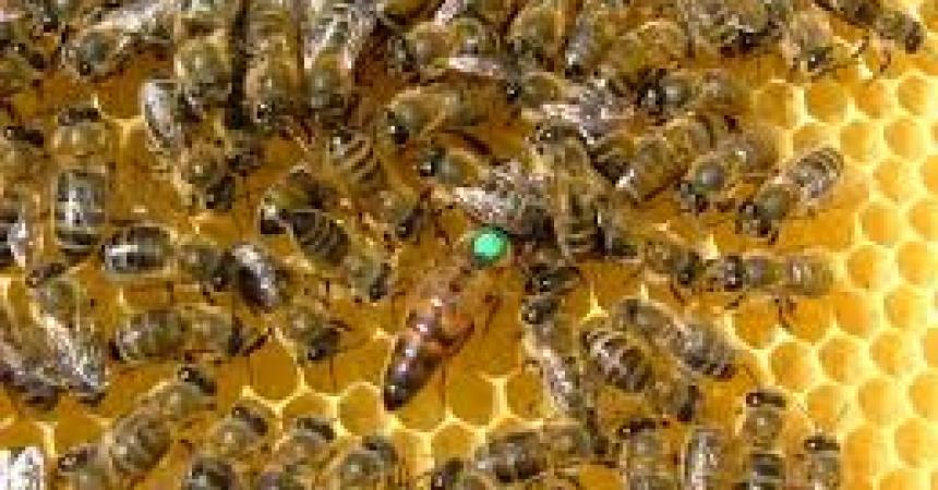 La Svizzera blocca l'importazioni di prodotti apicoli da Sicilia e Calabria