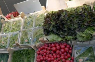 Cresce il mercato bio in Italia, nel 2014 vale oltre 2,6 miliardi