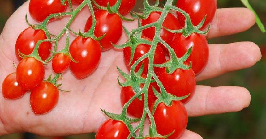 Alimentare: da Ragusa agli Usa, accordo texano per il ciliegino
