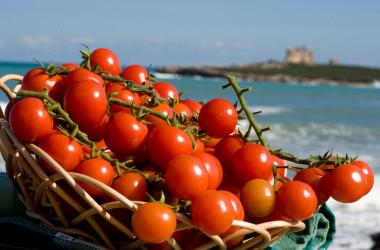 Agricoltura: crollano i prezzi, pomodoro -43%, grano duro -27%