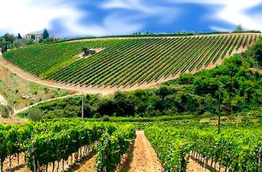 Consorzio Vini Doc Sicilia: al via campagna di promozione negli USA