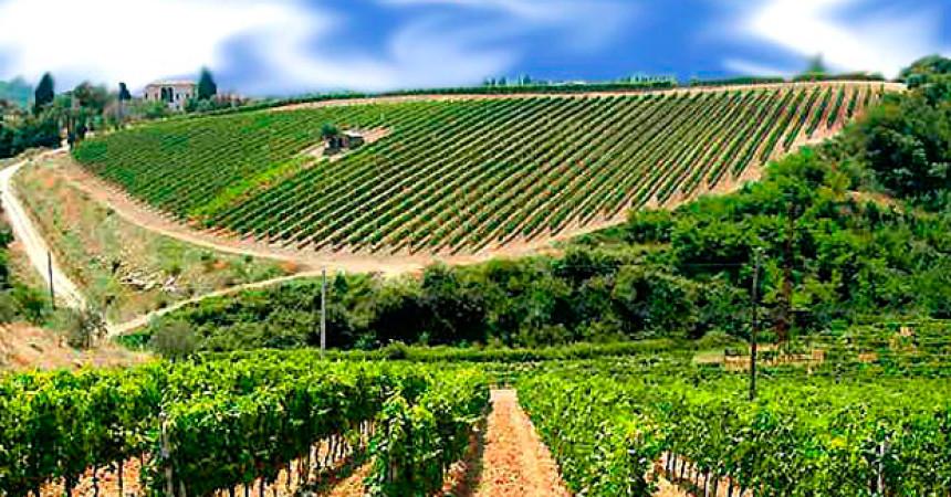 Italia leader nella produzione di vini biologici