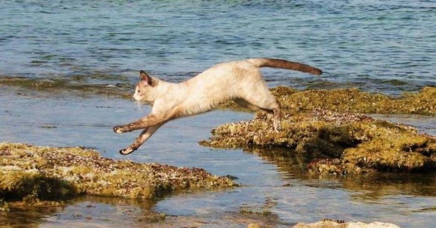 La favola di Pasqua, profuga siriana ritrova gatta persa in Sicilia