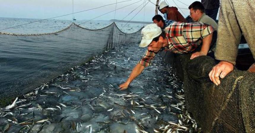 Pesca: Commissione Ue, ancora troppe catture in Mediterraneo