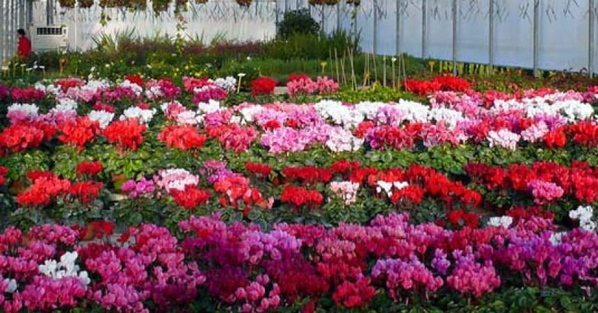 Giarre evento dedicato all'export del florovivaismo mediterraneo