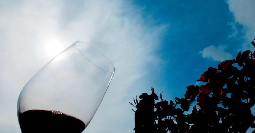 Vino: in Sicilia vendemmia 2015 da ricordare
