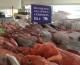 Missione commerciale del Distretto della Pesca in Algeria e Tunisia