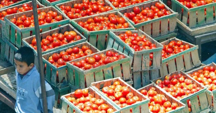 L'Italia si mobilita in Ue per difesa pomodoro e olio
