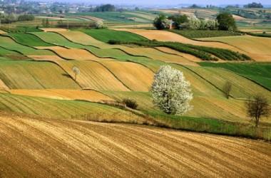 Agricoltura: oltre 2 mld di euro per la Sicilia entro il 2020