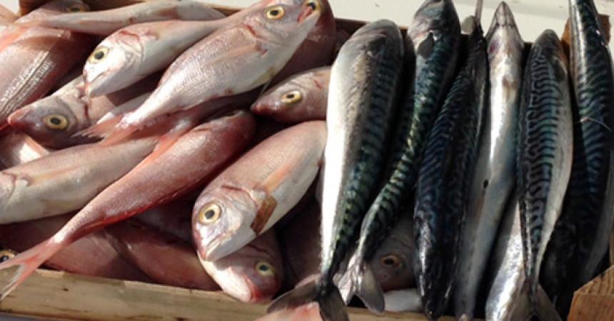 Conservazione del pesce a bordo ed etichettatura, si è concluso in Tunisia progetto di cooperazione
