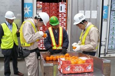 Via libera all'esportazione di agrumi in Cina