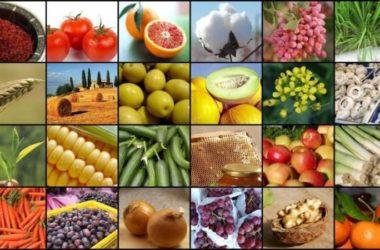 Agrofood, in Sicindustria a Palermo incontri con 85 produttori internazionali