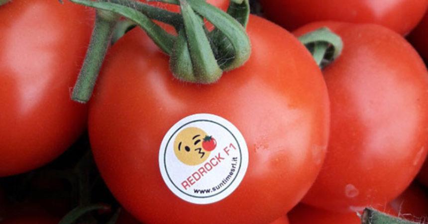 Pomodoro Redrock, il grappolo rosso ideale per l'export