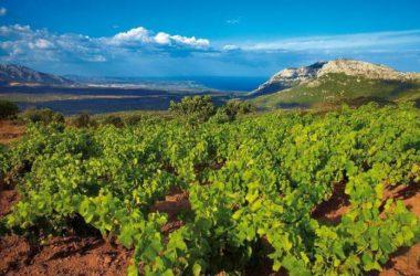 Agroalimentare: Unicredit, in Sicilia rappresenta il 5,3 del Pil