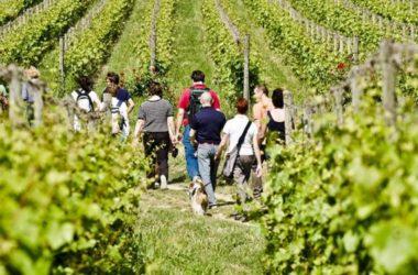 """Alla scoperta dei vini siciliani con """"Cantine Aperte"""""""