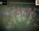 Festa con 300 persone sorprese a ballare, chiuso locale a Palermo