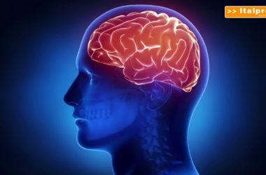 Scoperte, così il cervello si protegge dalle infiammazioni intestinali